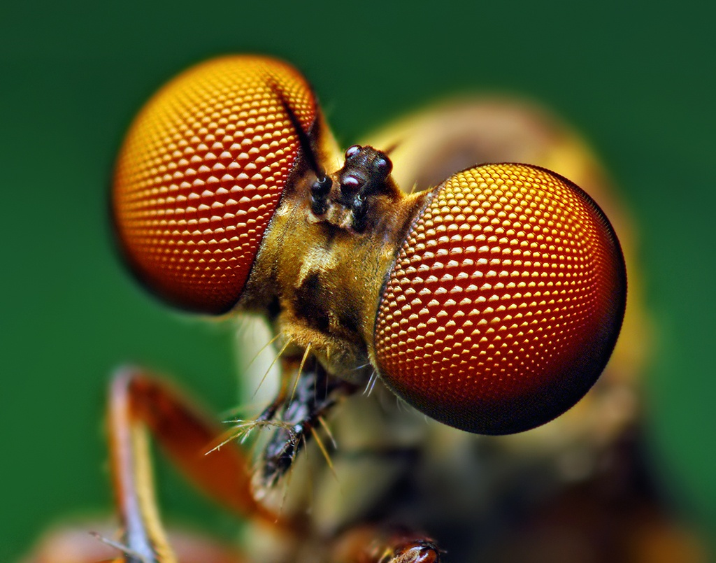 Tips on Macro Photography